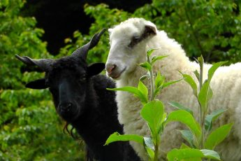 Islamic Perspective on Animal Welfare